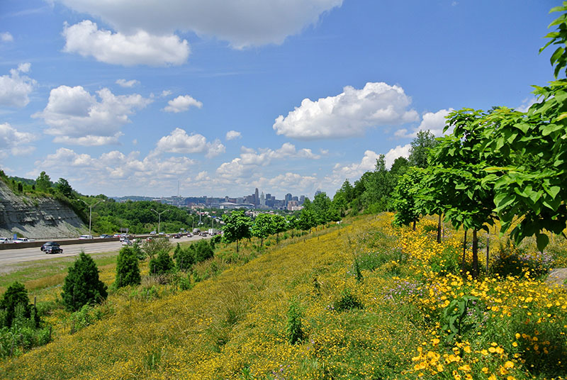 Terraced-Reforestation-of-Interstate-ROW-Covington