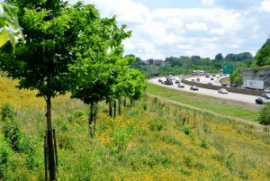 Green space next to highway